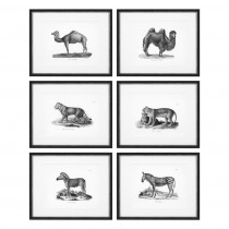 Historical Animals Set of 6 Prints